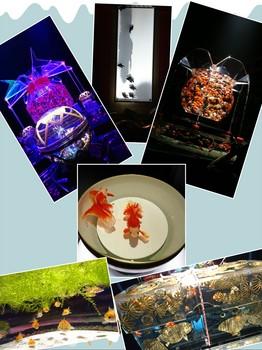 collage-1504864151932.jpg