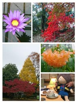 collage-1512122024356.jpg