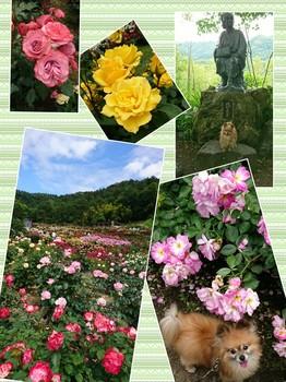 collage-1497883090894.jpg